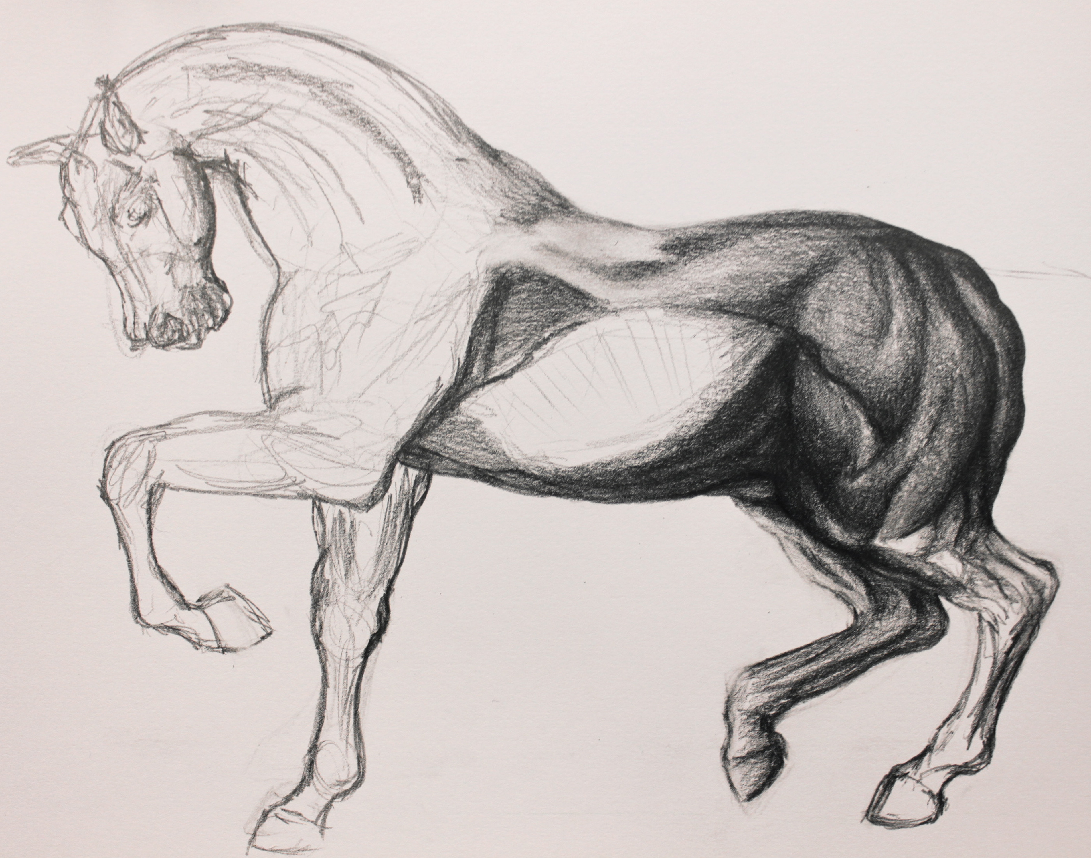 Upcoming Personal Piece: Horse Drawing Process – Jessica ...